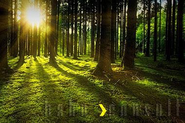 Für jede bessergrün-Versicherung, pflanzen wir einen Baum! Hahn Consult